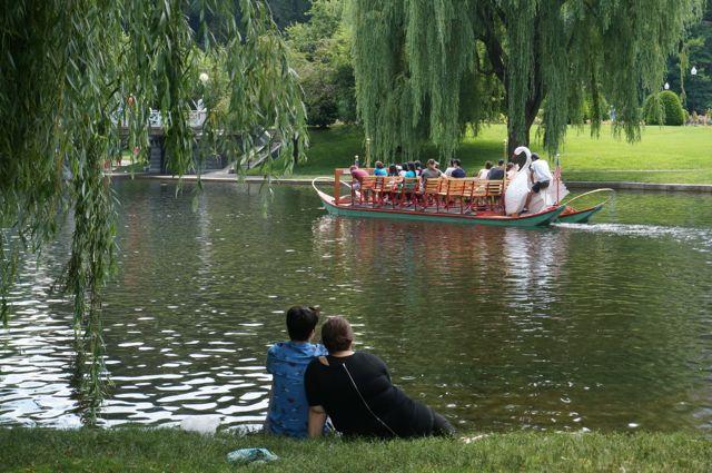 Boston swans