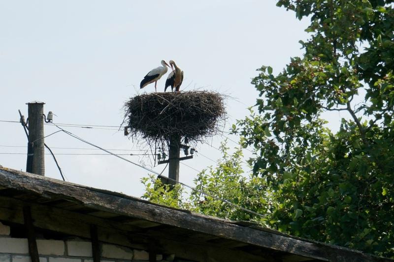 Storks 5