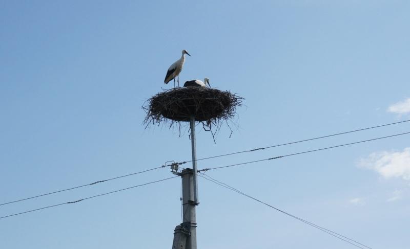Storks 6